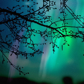 Aurora Borealis and Tree Branch