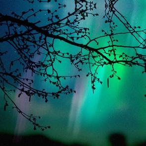 Aurora Borealis and Tree Branch