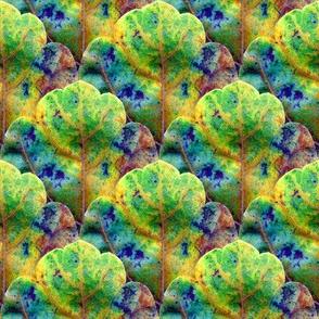 Leaf Scale 2