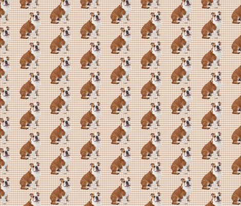 Bulldog on Plaid fabric by pateisen on Spoonflower - custom fabric