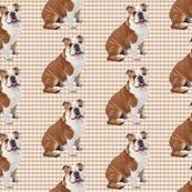 Radult_bulldog_shop_thumb