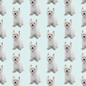 Westie Stripe