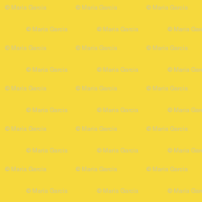 Yellow Bumblebee Solid for Pink Lemonade
