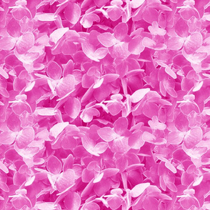 hydrangeas-pink