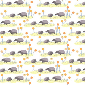 Hedgehogs in a field-white