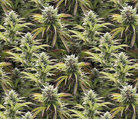 Big Beautiful Buds fabric by camomoto on Spoonflower - custom fabric