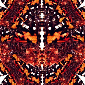 Butterfly Kaleidoscope