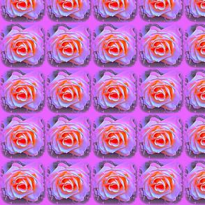 3 D Roses I