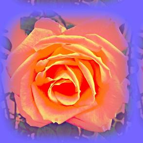 3 D Roses Peach & Lavender