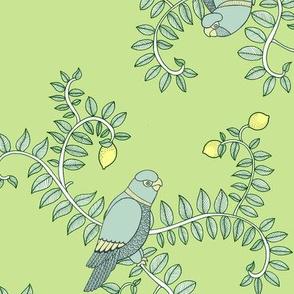 Citrus & Parrots
