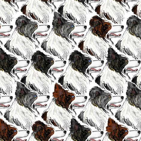 Rborder_collies_shop_preview