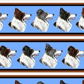 Border Collie Stripe