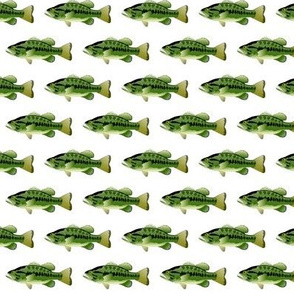 Largemouth Bass Pattern