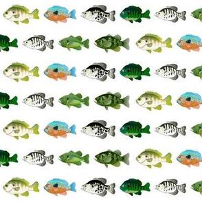 7 Sunfish Pattern