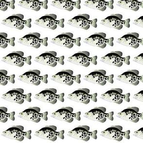 Black Crappie Pattern