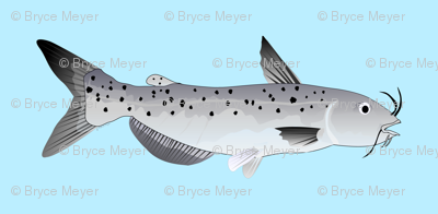 Channel Catfish in light blue