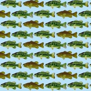 3 black bass lt blue background-ch