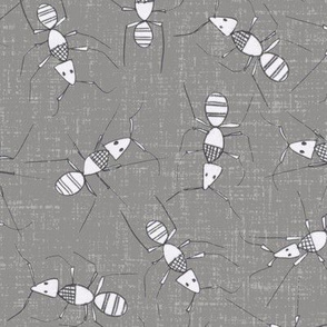 pencil ants
