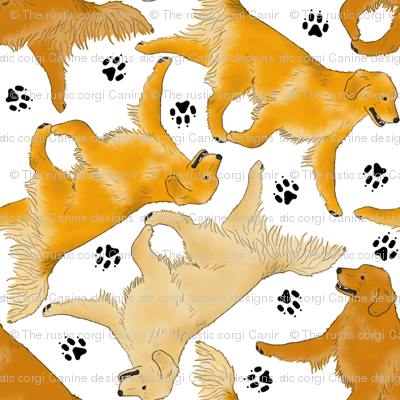 Trotting Golden Retrievers and paw prints - white