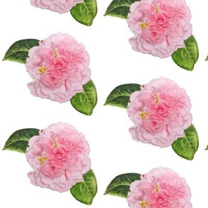 Pink Ruffled Camellia