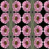 Rcactusrose2001_shop_thumb