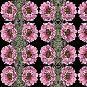 cactusrose2001