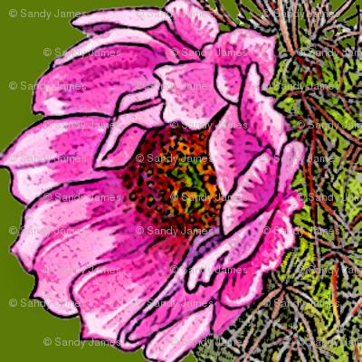 cactusrose2004