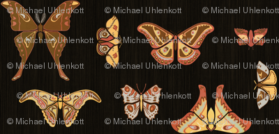 Lepidoptera 1a