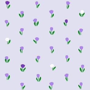 Tulip Starlight 2015