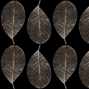 skeletonized leaves