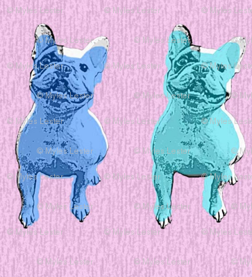 Bertie x 2 - blue and teal with pink background