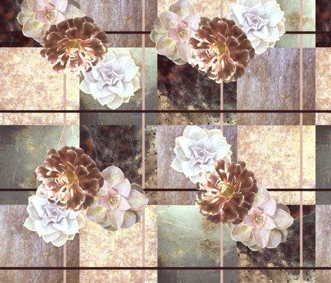 Succulents_1_dusty__pink_shop_preview