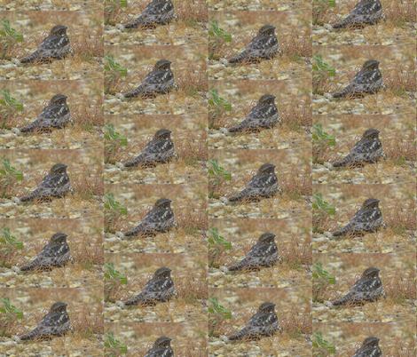 Common Nighthawk Bird fabric by customheirlooms on Spoonflower - custom fabric