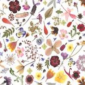 Multiflowers_cleaned_shop_thumb