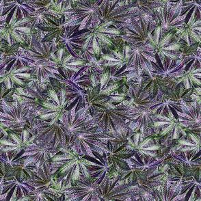 Indica Leaf Shiny