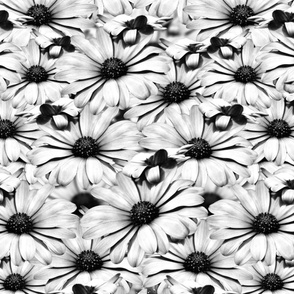 Black and White Dairy Floral