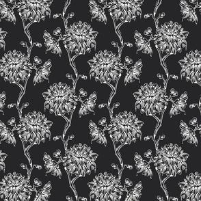 Chrysanthemum in black