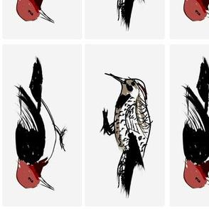 Woodpeckers 1