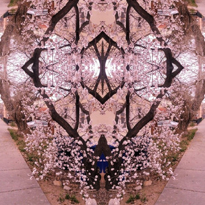 Cherry Blossoms - large print