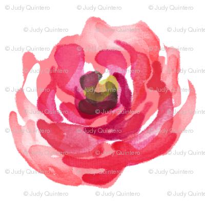 Deep Bright Pink Roses