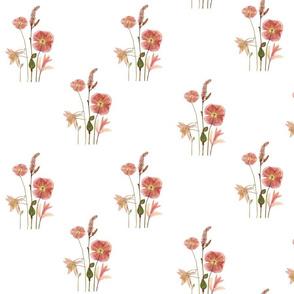 Blush Poppy
