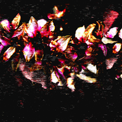 florals_black_background_color_guide_basic_cotton