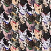 Rfrench_bulldogs2_shop_thumb