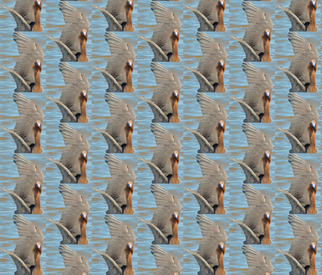 Fishing Reddish Egret fabric by customheirlooms on Spoonflower - custom fabric