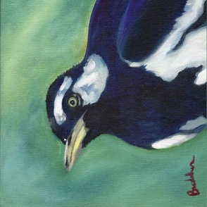 Angry Magpie Lark