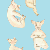 yoga_pig_on_blue_