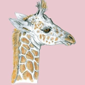 Custom Baby Giraffe for Minky half drop Pink