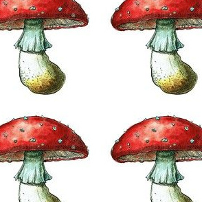 Watercolor toadstool