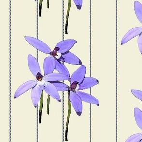 Waxlip Orchid Stripe