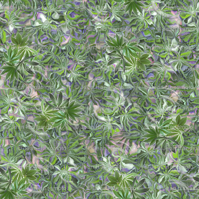 Green Indica Dance